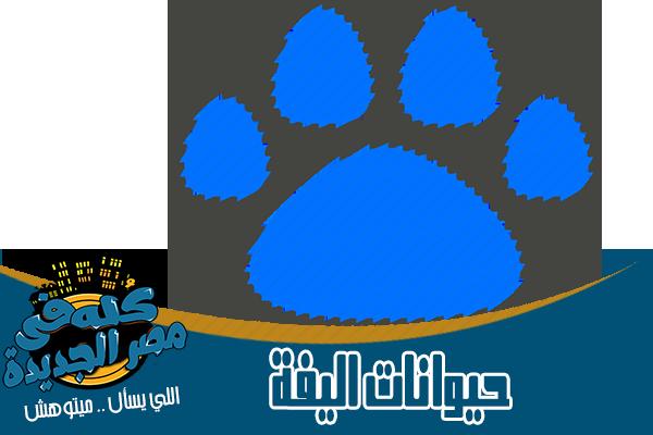 محلات حيوانات اليفة وادوات صيد واكل في مصر الجديدة